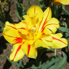 Juego online MLL Breaker Gallery: Flowers