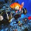Juego online Underwater Adventure Hidden Object